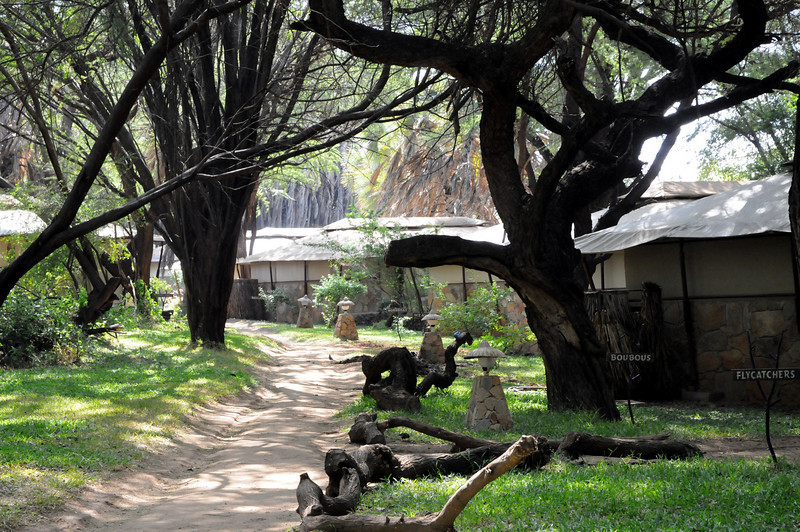 Larsens Tented Camp