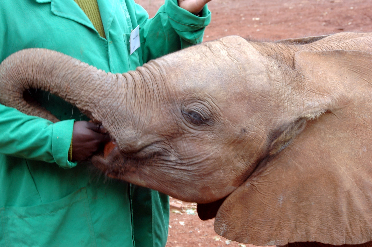 David Sheldrick Wildlife Trust Elephant Orphanage