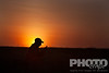 Side view of young male African guide wrapped in red Masai shuka (blanket), crouching in grass, silhouetted against red sunrise sky, using mobile phone,  Lewa Downs, Kenya, Africa