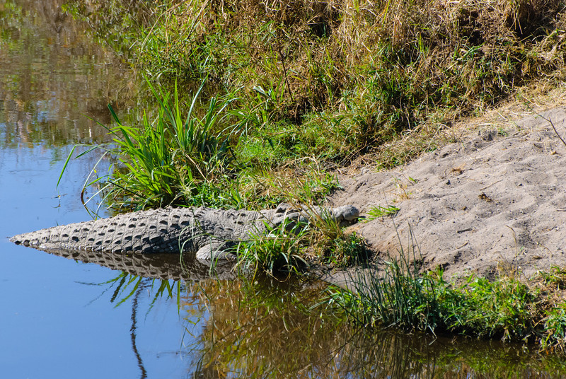 Our first crocodile sighting!