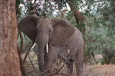 Kruger NP Pufuri Camp