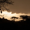 Sunset in the Serengeti with weaver bird nests on the left