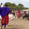 The Masai people brought their cattle for sale. The Masai are known for their colorful robes and keeping many of their traditions