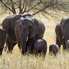Young and older elephant family group.