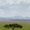 Open savannah near one of the marshes in Tarangire