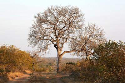 Africa_0106