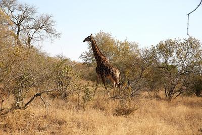 Africa_0052