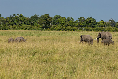 Africa Elephents grazig