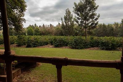 Ngorongoro Conservation Area;
