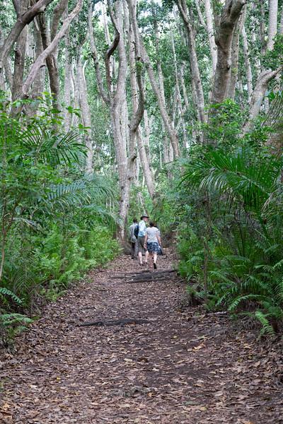 Through the hardwood forest of Zanzibar