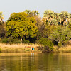 Along the Zambezi River, Zimbabwe