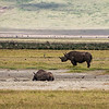 Two black rhinos in the Ngorongoro crater.