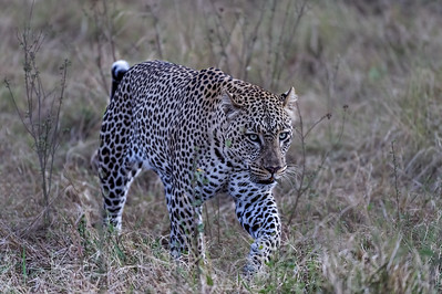 Africa-August-2016