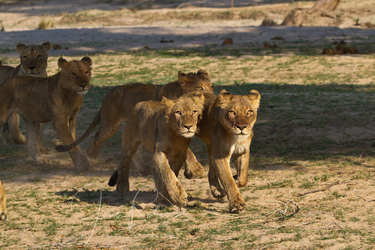 Young Lions, Zambia. 2011