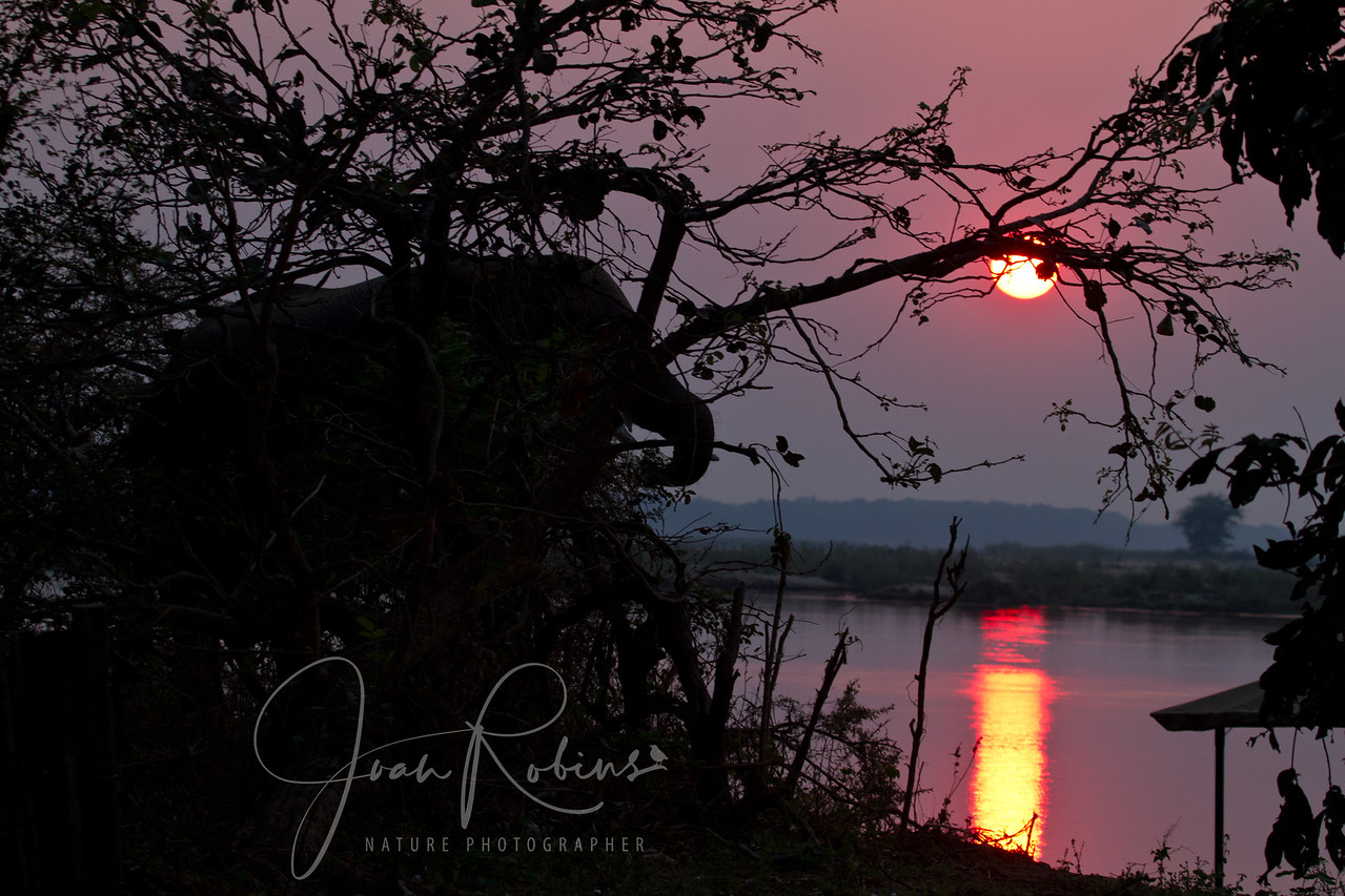 Sunset over the Zambezi River, Zambia