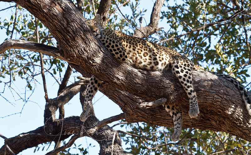 Safety and relaxation, Botswana
