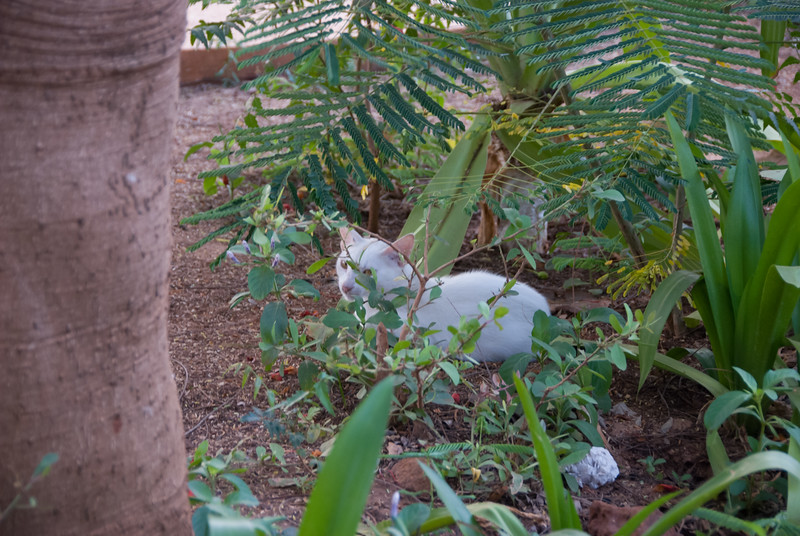 one of the resident cats on theresort in Bour. This was the smallest feline we saw on our trip