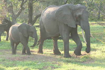 Africa Dec 2008