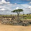 A great water hole in the central Serengeti.  Lots of zebras and wildebeest.