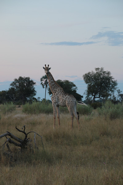 Our friend that showed up for Sundowners