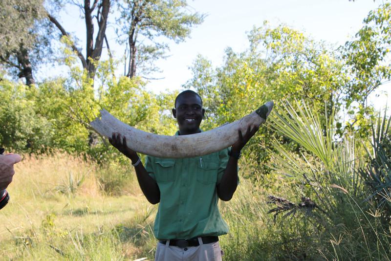 Onks holding the Elephant tusk