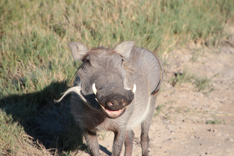 Wart Hog smiling for his picture!