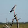 Namibia, Etosha NP (533 of 897)
