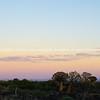 Silhouette quiver tree landscape at sunrise