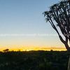Silhouette quiver tree landscape at sunset