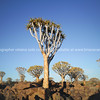 Namibia boulder strewn Quiver Tree Forest