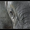 Elephant in Colour, Ol Pejeta Conservancy, Kenya 2011