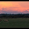 Oryx and Sunset, CKGR, Botswana, 2010