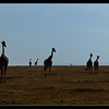 The Journey, Ol Pejeta Conservancy, Kenya 2011