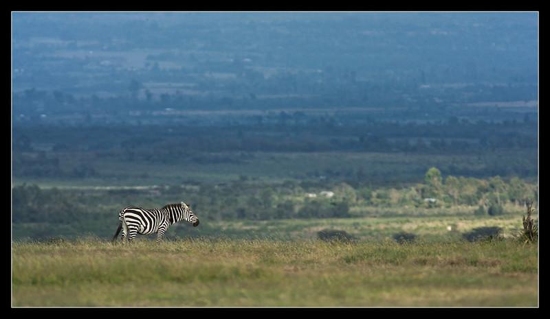 Blue and Green, Ol Pejeta Conservancy, Kenya 2011