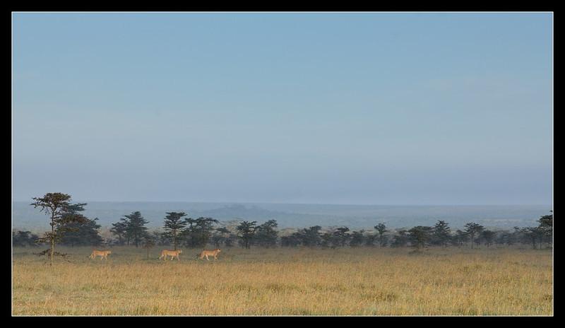 In the Morning, Ol Pejeta Conservancy, Kenya 2011