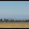 In the Morning, Ol Pejeta Conservancy, Kenya 2011