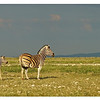 Zebra and Foal, Etosha, Namibia, 2007