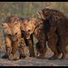 Young Hyenas, Ol Pejeta Conservancy, Kenya 2011