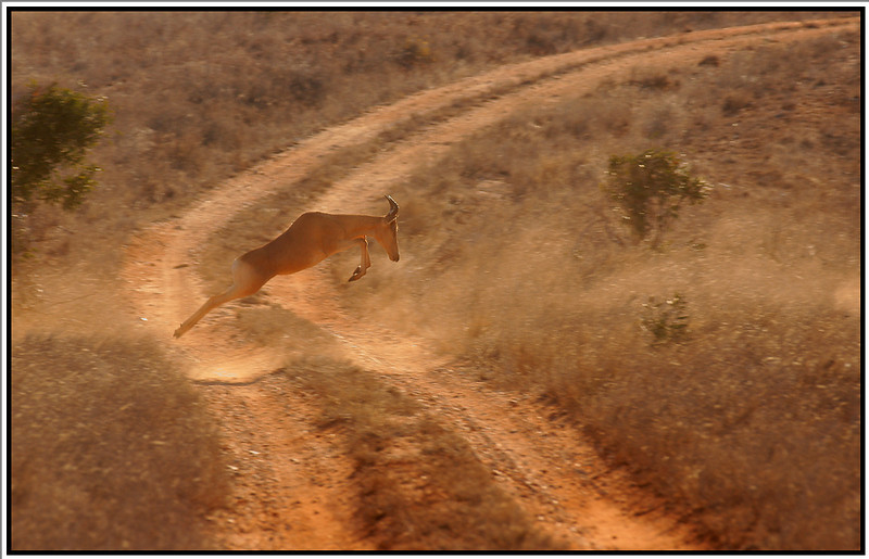 Hartebeest, Tsavo East, Kenya, 2008