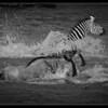 River Race, Maasai Mara, Kenya 2011