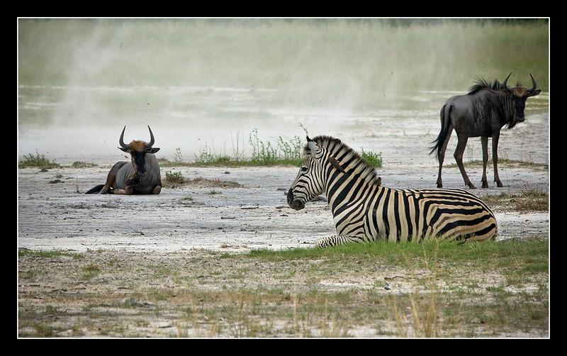 Dust Devil, Moremi, Botswana, 2010