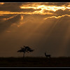Evening on Ol Pejeta Conservancy, Kenya, 2011
