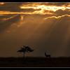 Evening on Ol Pejeta Conservancy, Kenya, 2011