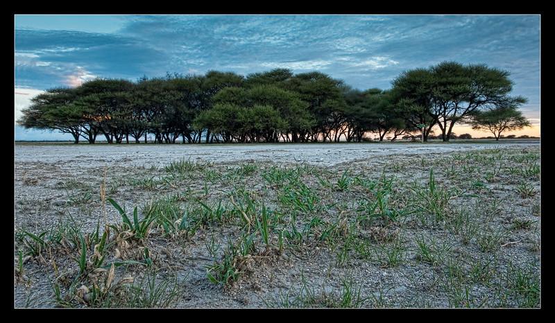 Owen's Island, CKGR, Botswana, 2010