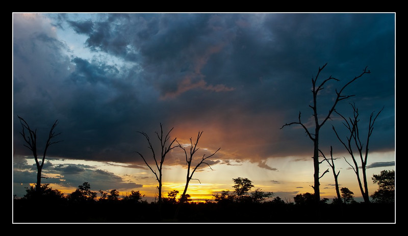 Moremi, Botswana, 2011