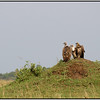 Watch and Wait, Maasai Mara Reserve, Kenya, 2008