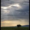 Maasai Meeting Tree, Kenya, 2009