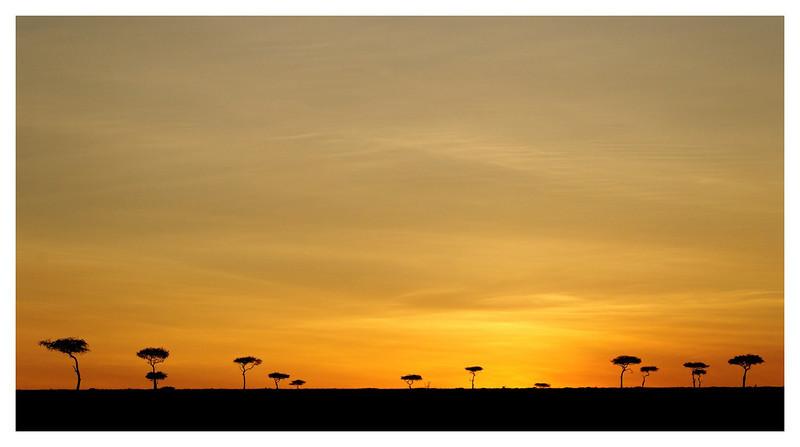 Sunset Acacias, Mara North Conservancy, 2009