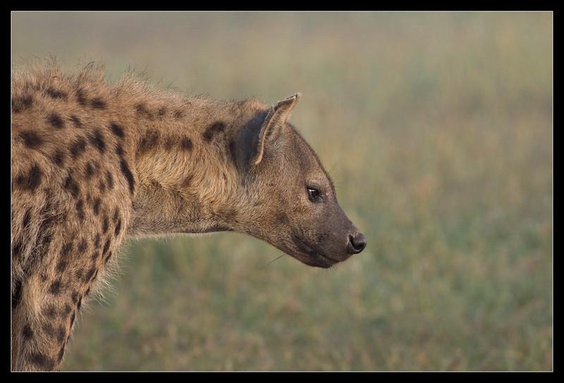 Hyena Mother, Ol Pejeta Conservancy, Kenya 2011