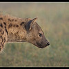 Hyena Mother, Ol Pejeta Conservancy, Kenya 2011
